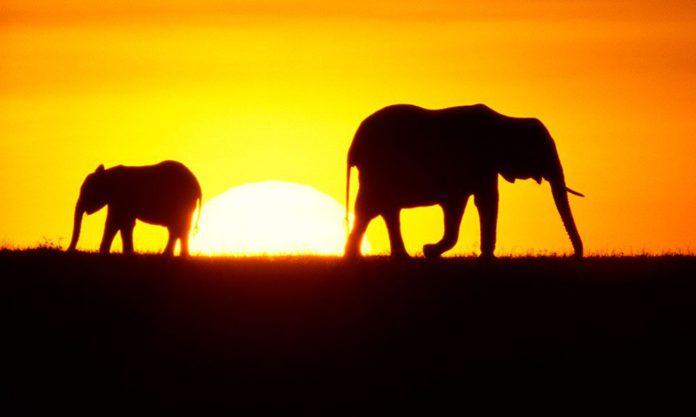 Zaruma Safaris