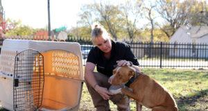 SPCA of Texas