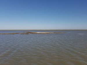 oyster reef