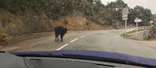 2018_Jaguar_E-Pace_in_Corsica-1583