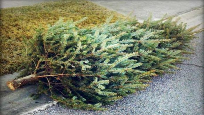 DeSoto Christmas Tree Recycling