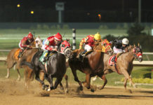 Lone Star Park 2019 Quarter Horse Season