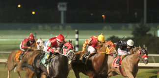 Lone Star Park 2019 Quarter Horse Season