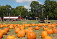 Texas State Railroad Pumpkin Patch