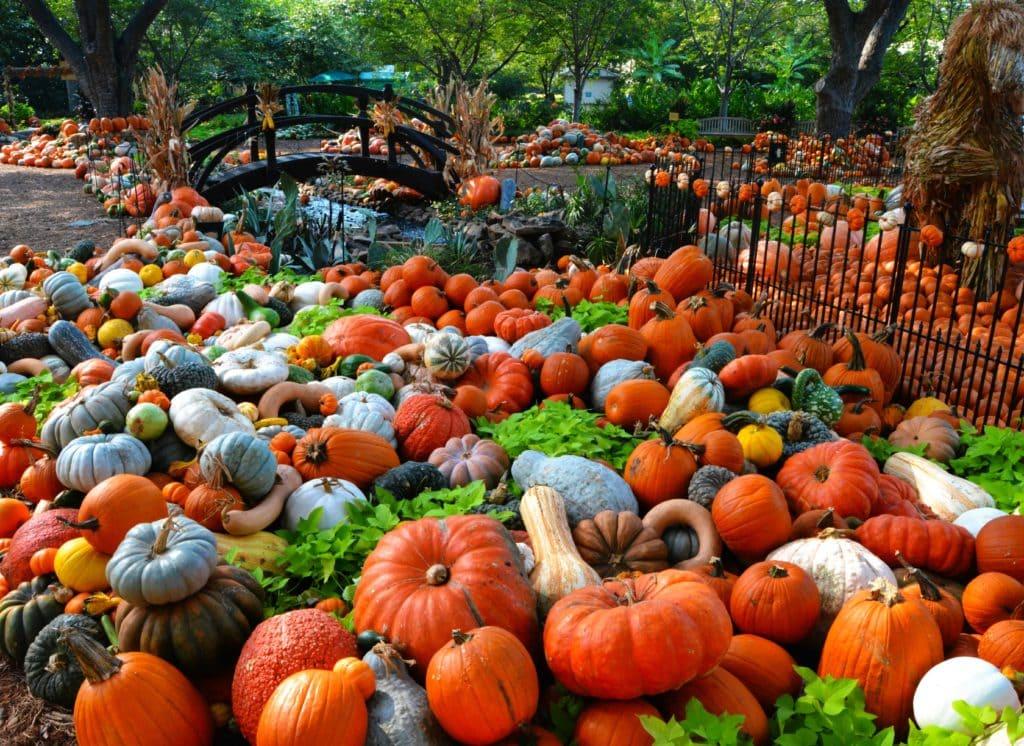 Dallas Arboretum Hosts Fall FEstival