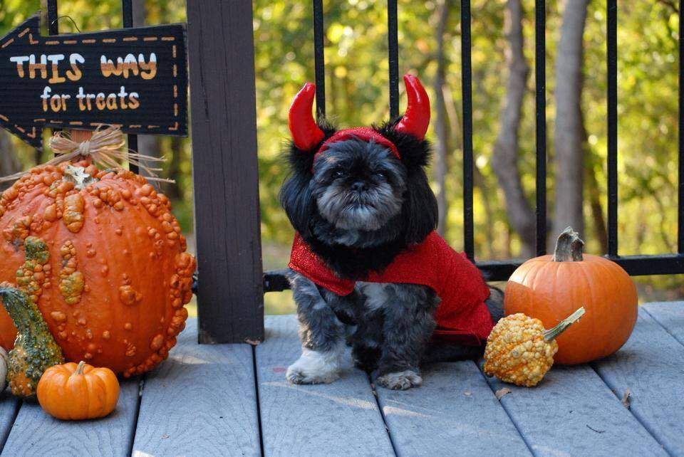 By the Horns Halloween
