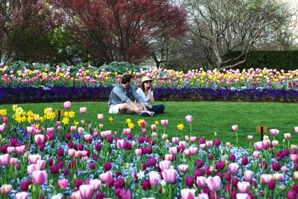 Marjorie and Trevor Hylton Co-chairing 2020 Dallas Blooms