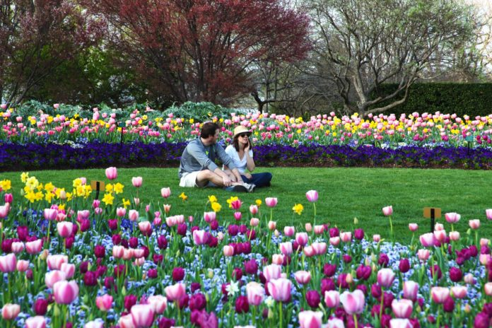 man and woman in field surrounded by tulips