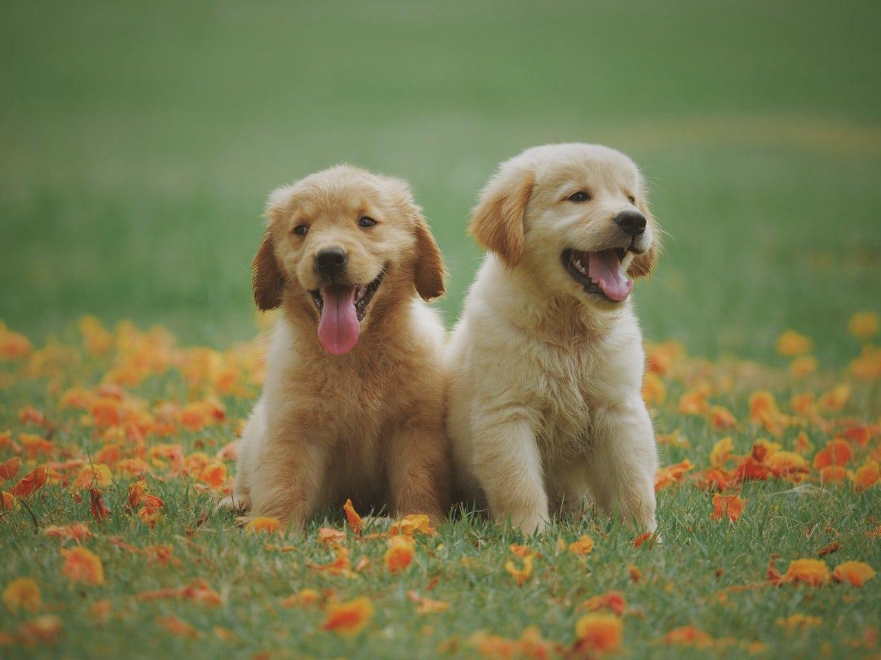 Dallas Pets Alive! PASS Program