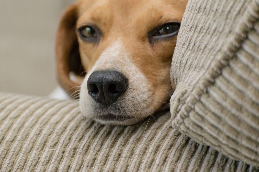 Dallas Pets Alive! PASS Program Needs Help