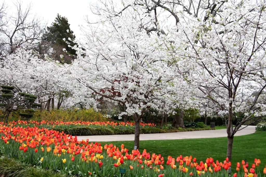 Dallas Arboretum Reopens June 1st