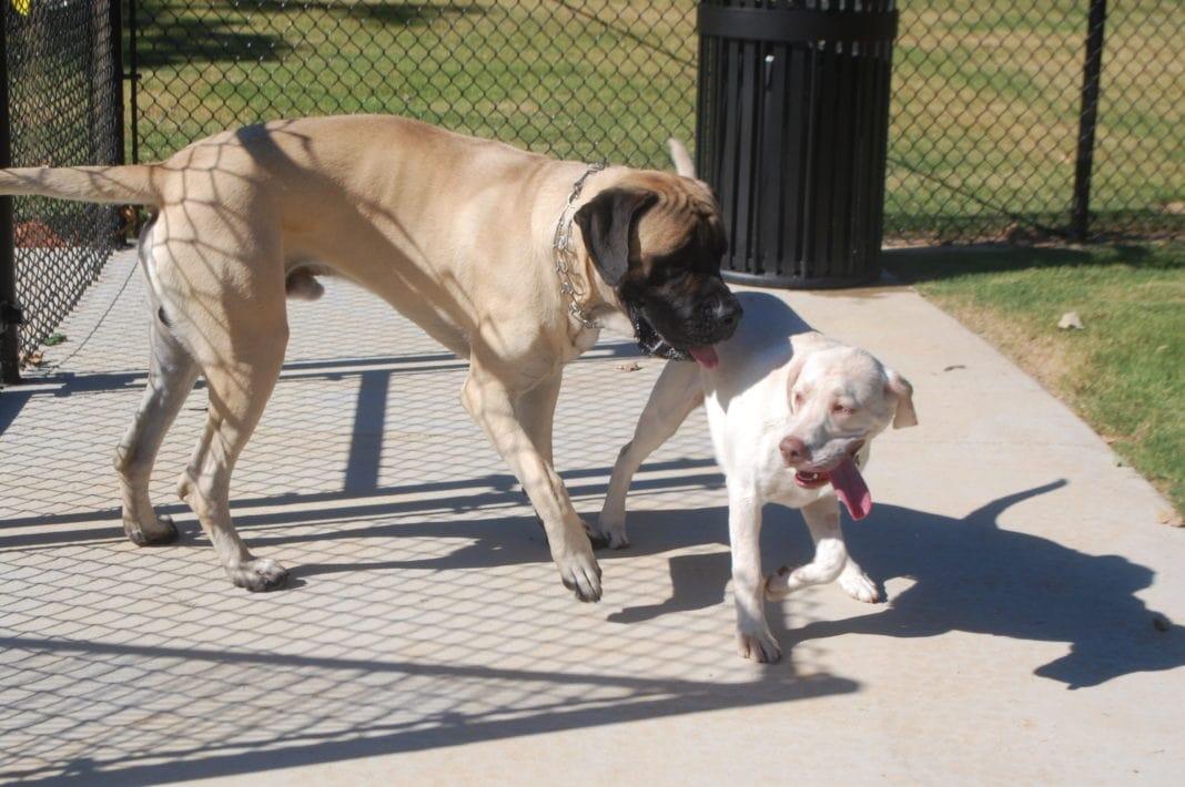big dog sniffing small dog