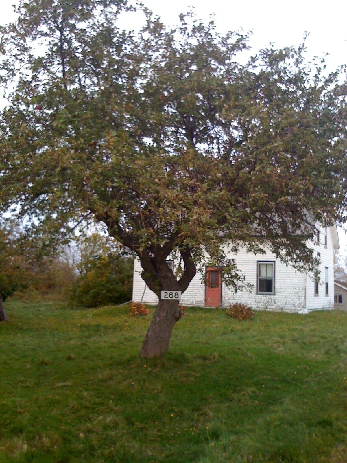 Home in Nova Scotia