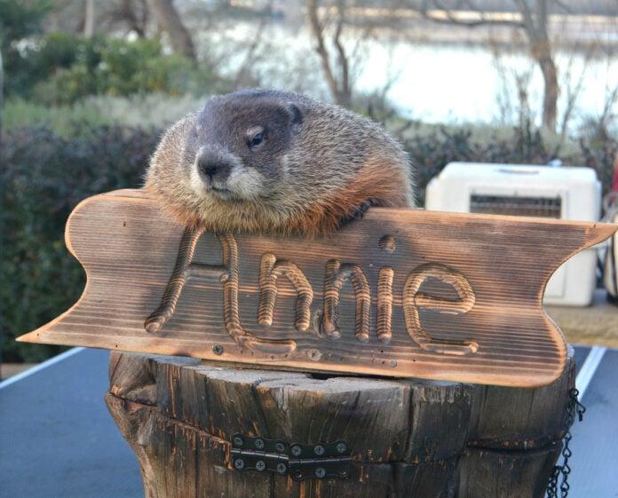 Groundhog Day at Dallas Arboretum