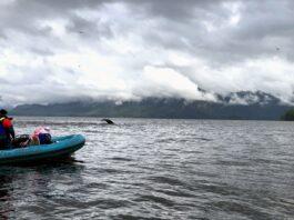 zodiac boat close to whale