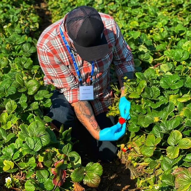Man holding strawberry in field